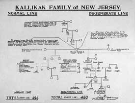Kallikak family of New Jersey pedigree chart. Courtesy of Paul Lombardo.