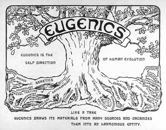 Eugenics Tree Logo. Courtesy of the American Philosophical Society.