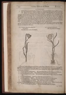 Gerard, The Herball…, p 150