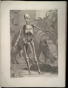 Albinus, Tables of the Skeleton and Muscles…, tab 4