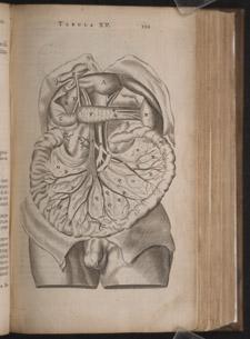 Bartholin,…Anatome ex omnium…, p 101