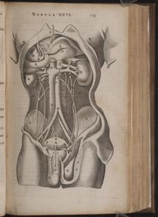 Bartholin,…Anatome ex omnium…, p 175