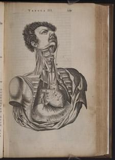 Bartholin,…Anatome ex omnium…, p 359