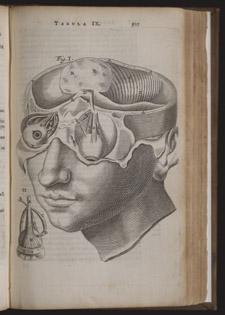 Bartholin,…Anatome ex omnium…, p 507