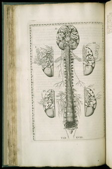 Eustachi, Tabulae anatomicae…, tab XVIII