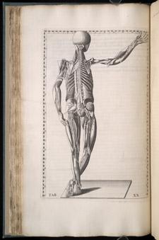 Eustachi, Tabulae anatomicae…, tab XX
