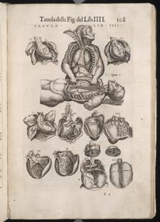 Valverde, La anatomia del corpo umano, p 108