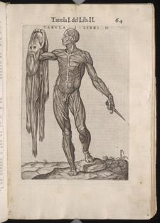 Valverde, La anatomia del corpo umano, p 64
