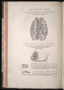 Vesalius,…de humani corporis fabrica libri septem, p 108