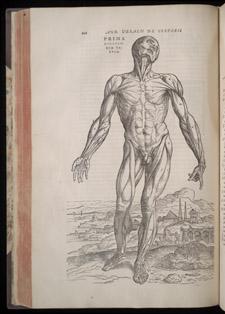 Vesalius,…de humani corporis fabrica libri septem, p 210