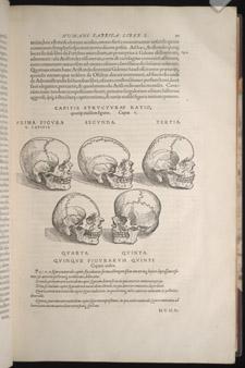Vesalius,…de humani corporis fabrica libri septem, p 21