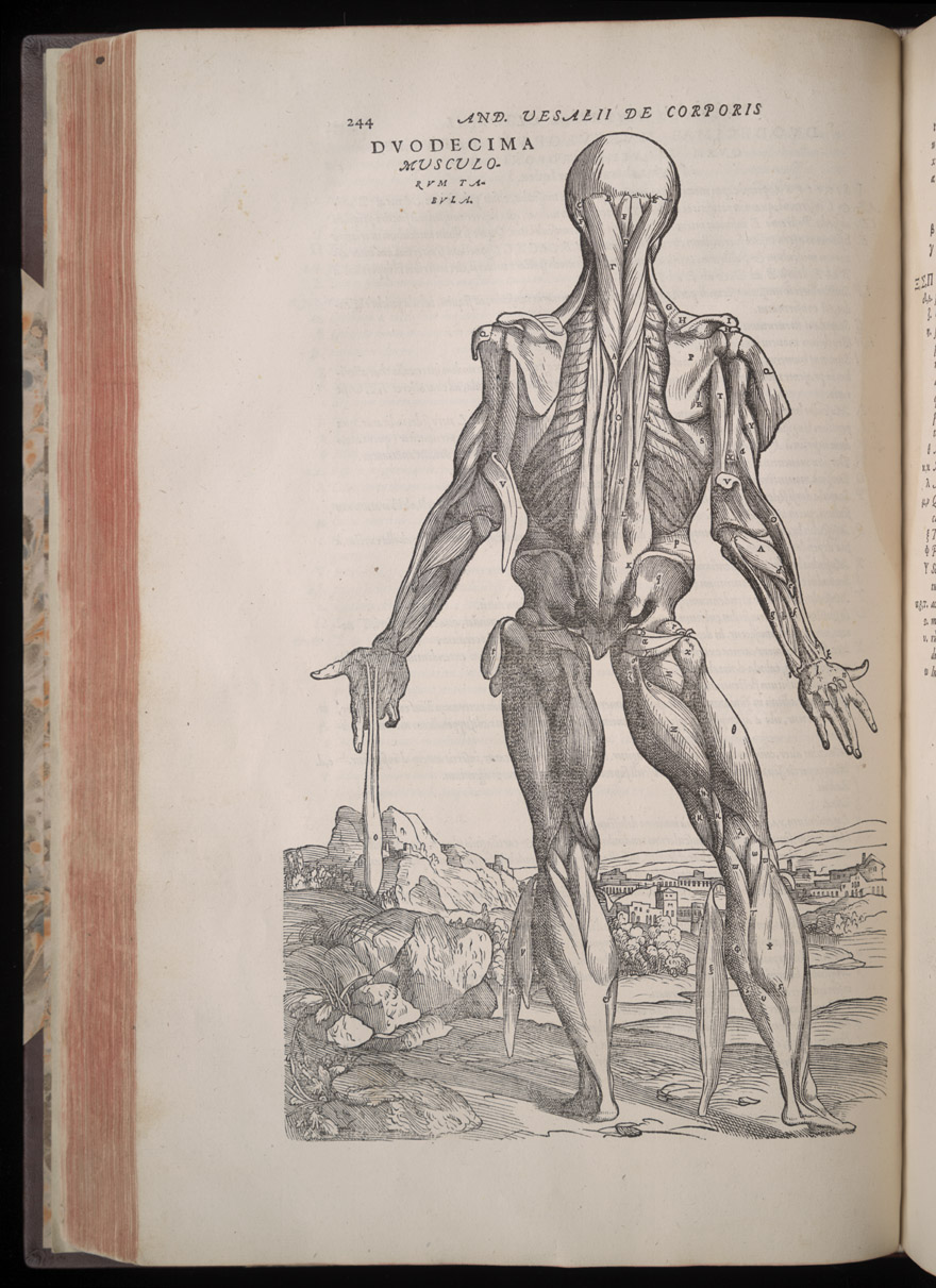 Andreas Vesalius (1514-1564) | Vaulted Treasures: Historical Medical ...