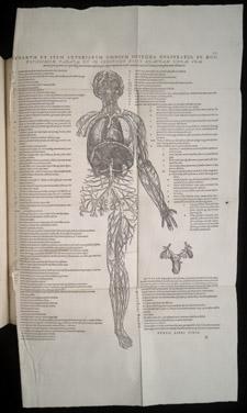 Vesalius,…de humani corporis fabrica libri septem, p 505