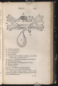 Glisson,…Anatomia hepatica…, p 235