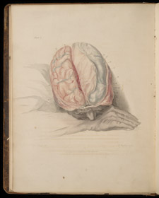 Bell, The Anatomy of the Brain…, plate I