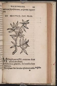 Arnaldus, de Villonova and the School of Salerno, De conservanda bona valetudine…, p 105